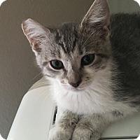 Adopt A Pet :: Lucy - Yorba Linda, CA
