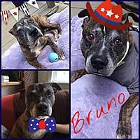 Adopt A Pet :: Bruno - Baltimore, MD