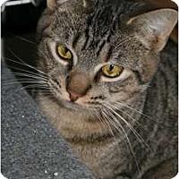 Adopt A Pet :: Sace - Frederick, MD