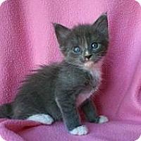 Adopt A Pet :: BlueAngel - Phoenix, AZ