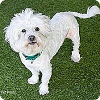 Adopt A Pet :: Milo - Mission Viejo, CA