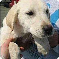 Adopt A Pet :: Tre - Cumming, GA