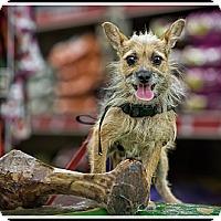 Adopt A Pet :: Bentley - Wickenburg, AZ