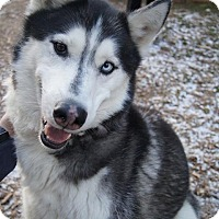 Adopt A Pet :: Shadow - Horsham, PA