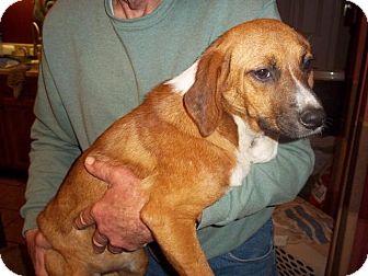 Hound (Unknown Type) Mix Dog for adoption in Danbury, Connecticut - Reba