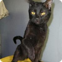 Adopt A Pet :: Kate - Norwich, NY