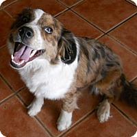 Adopt A Pet :: jethro - dewey, AZ