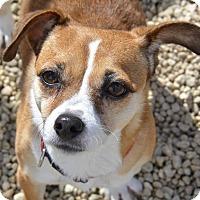 Adopt A Pet :: Alexandria - Meridian, ID