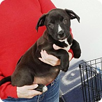 Adopt A Pet :: Major - Livingston, TX