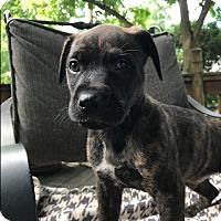 Adopt A Pet :: Farley - Greeneville, TN