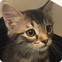 Adopt A Pet :: Athos - LaJolla, CA