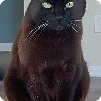 Adopt A Pet :: Dandelion - Vancouver, BC
