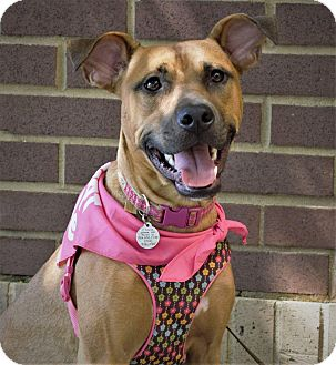 Shepherd (Unknown Type) Mix Dog for adoption in Charlotte, North Carolina - Raine