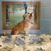 Adopt A Pet :: URGENT ON 8/12  San Bernardino - San Bernardino, CA
