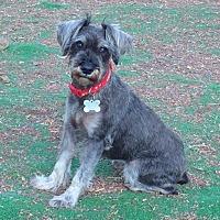 Adopt A Pet :: Karen - San Diego, CA