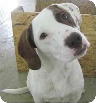 Beagle Mix Dog for adoption in Lake Odessa, Michigan - Layla