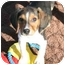 Photo 1 - Beagle Puppy for adoption in Waldorf, Maryland - Tyler Florence