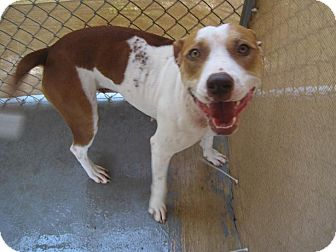 Pit Bull Terrier Mix Dog for adoption in San Antonio, Texas - Maggie