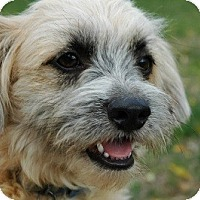 Adopt A Pet :: WALLY - Salt Lake City, UT