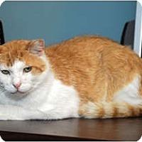 Adopt A Pet :: Vagabon - Farmingdale, NY