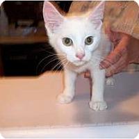 Adopt A Pet :: Bo and Luke - Acme, PA