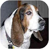 Adopt A Pet :: Baggins - Phoenix, AZ