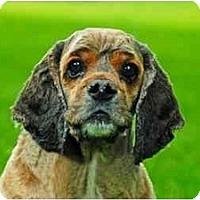Adopt A Pet :: Rebel - Tacoma, WA