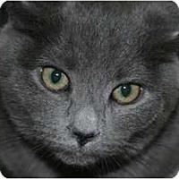 Adopt A Pet :: Sabrina - Frederick, MD