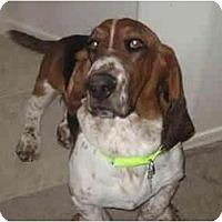 Adopt A Pet :: Buckley - Phoenix, AZ