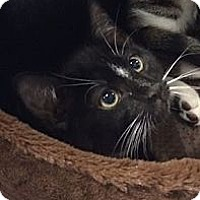 Adopt A Pet :: Smudge - Pittstown, NJ