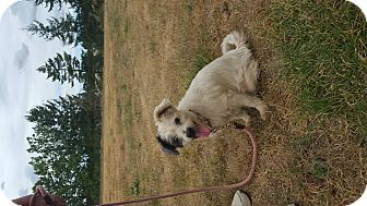 Terrier (Unknown Type, Medium) Mix Dog for adoption in Vancouver, Washington - Cassy