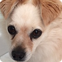 Adopt A Pet :: Gracie - in Maine - kennebunkport, ME
