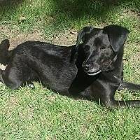 Spaniel (Unknown Type) Mix Dog for adoption in Tunica, Mississippi - Sparkle