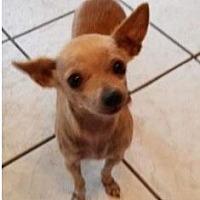 Adopt A Pet :: Madge - Dallas, TX