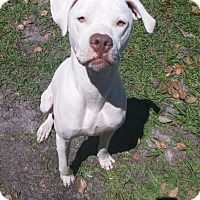 Adopt A Pet :: Kermit - Oviedo, FL