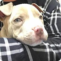 Adopt A Pet :: *ADOPTION PENDING*Ryder - Parsippany, NJ