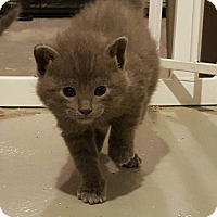 Adopt A Pet :: Carleton - Minot, ND