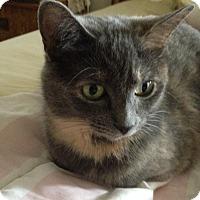 Adopt A Pet :: Luna - Lombard, IL