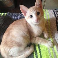 Adopt A Pet :: Peaches - Paradise, CA