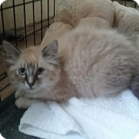 Adopt A Pet :: Moustachio - Medford, NJ