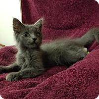 Adopt A Pet :: DA-TE - Montgomery City, MO