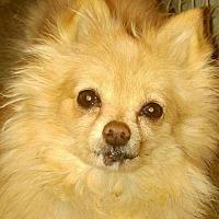 Adopt A Pet :: Pearl - Delaware, OH