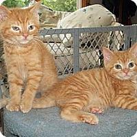 Adopt A Pet :: Johnny - Acme, PA