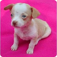 Adopt A Pet :: Sissy - Allentown, PA
