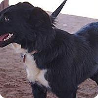 Adopt A Pet :: Heaven - Midland, TX