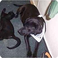 Adopt A Pet :: Ursula - Wakefield, RI