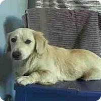 Adopt A Pet :: Mikey - Simi Valley, CA