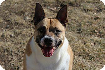 Akita Mix Dog for adoption in Bridgeport, California - Sheba