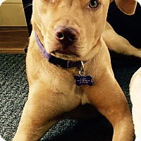 Adopt A Pet :: Katie a/k/a Kasey - in Maine - kennebunkport, ME