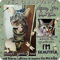 Adopt A Pet :: Missy foo - Monroe, NY